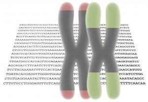 cover_telomeres
